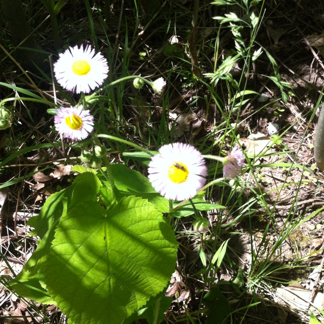 Pretty little weeds