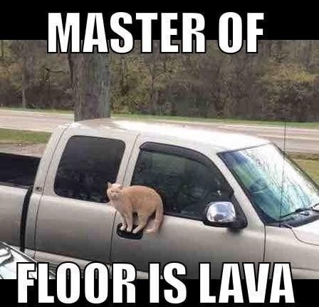 Funny Cat Memes Of The Day – 35 Pics Ep17