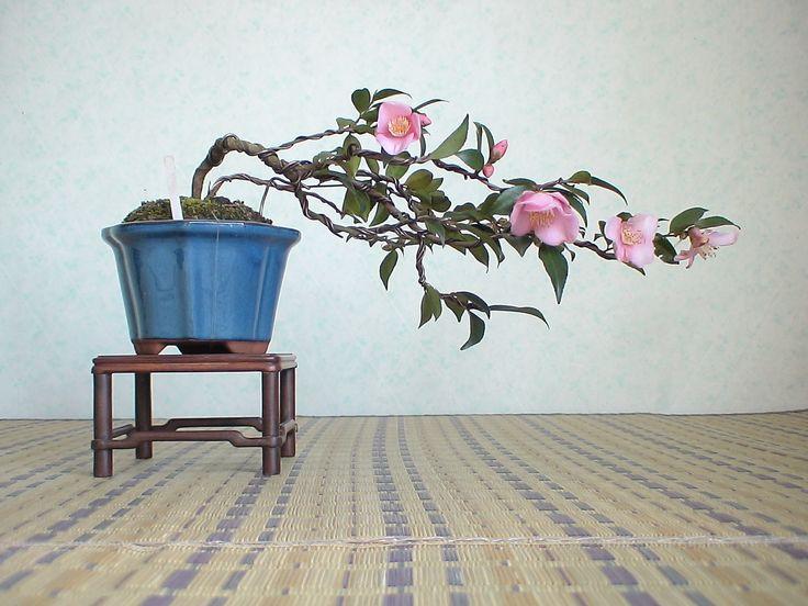 2007.弥生華風6 椿 ツバキ : 《 盆草遊楽 》