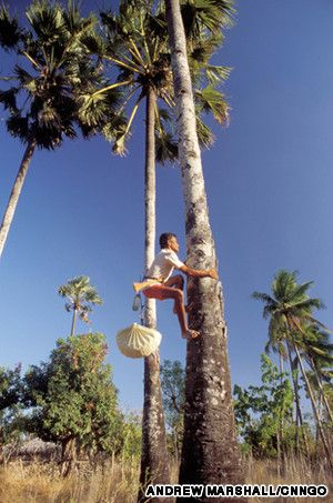Indonesia's 'tree of life' @ www.javasbeauty.com