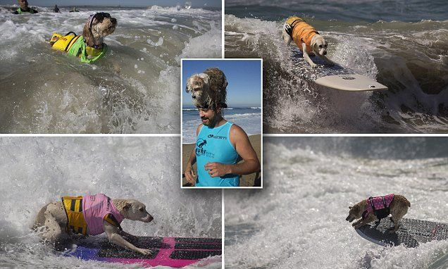 Pets take to the waves alongside owners at annual dog surfing contest