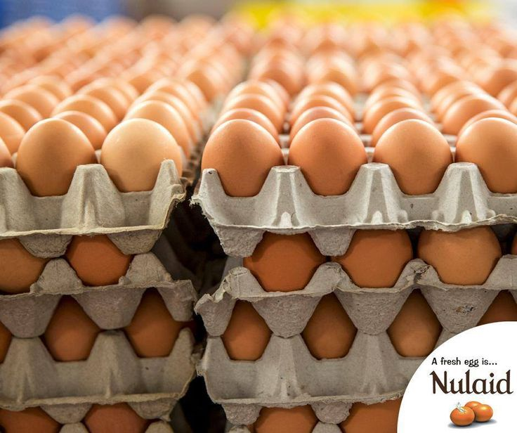 #DidYouKnow that it takes a hen 24 – 26 hours to produce one egg. #Nulaid