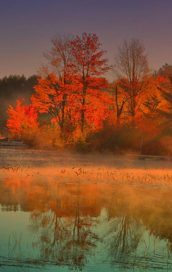 ✮ Orange trees on Brant Lake on a foggy morning