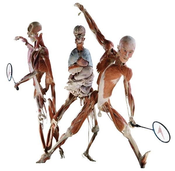 Dimenticate le solite esposizioni sul corpo umano perché Body Worlds va ben oltre