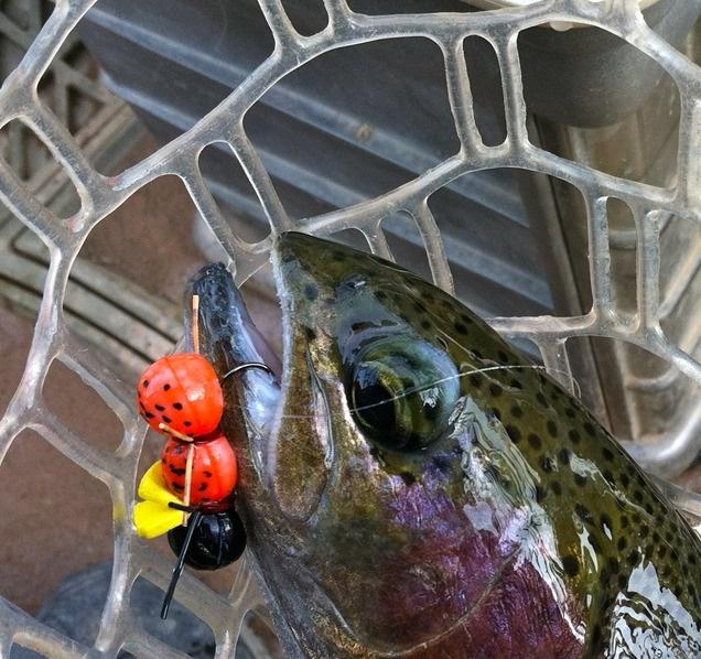 7 best fine art sporting images on pinterest sports for Green river utah fishing report