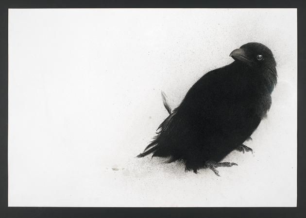My Heart a Wounded Crow / Sarah Gillespie