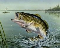 Image result for pic of largemouth bass
