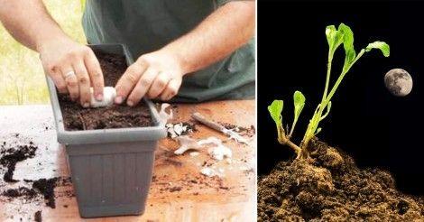 Cómo+cultivar+teniendo+en+cuenta+las+fases+lunares