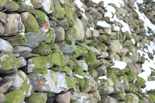 Spot the robin