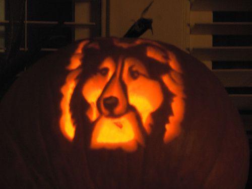 Sheltie carved pumpkin shetland sheepdog love