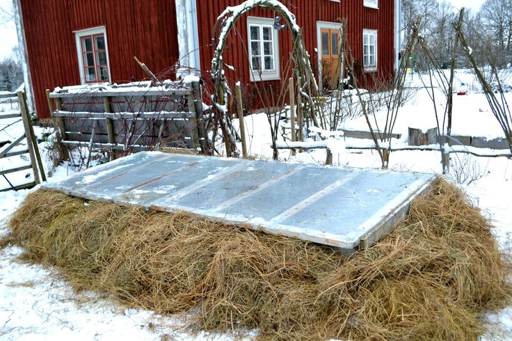 Hot bed in Sweden, February 2015. -3 degrees outside, now waiting for the heat to appear in the bed.  http://tidningenland.se/varmbanken-fardig-nu-borjar-vantan/ #garden #gardening #hotbed #growfood #trädgård #odla #varmbänk