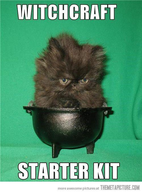 Omg that cat...