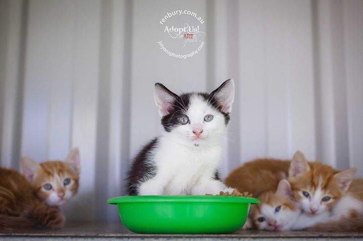 "Pounds all over Australia are currently full to the brim with gorgeous cats and kittens... please spread the word to Adopt and not shop from pet shops, kitten farmers or back yard breeders... if you have friends who's cats got ""accidentally"" pregnant plea 