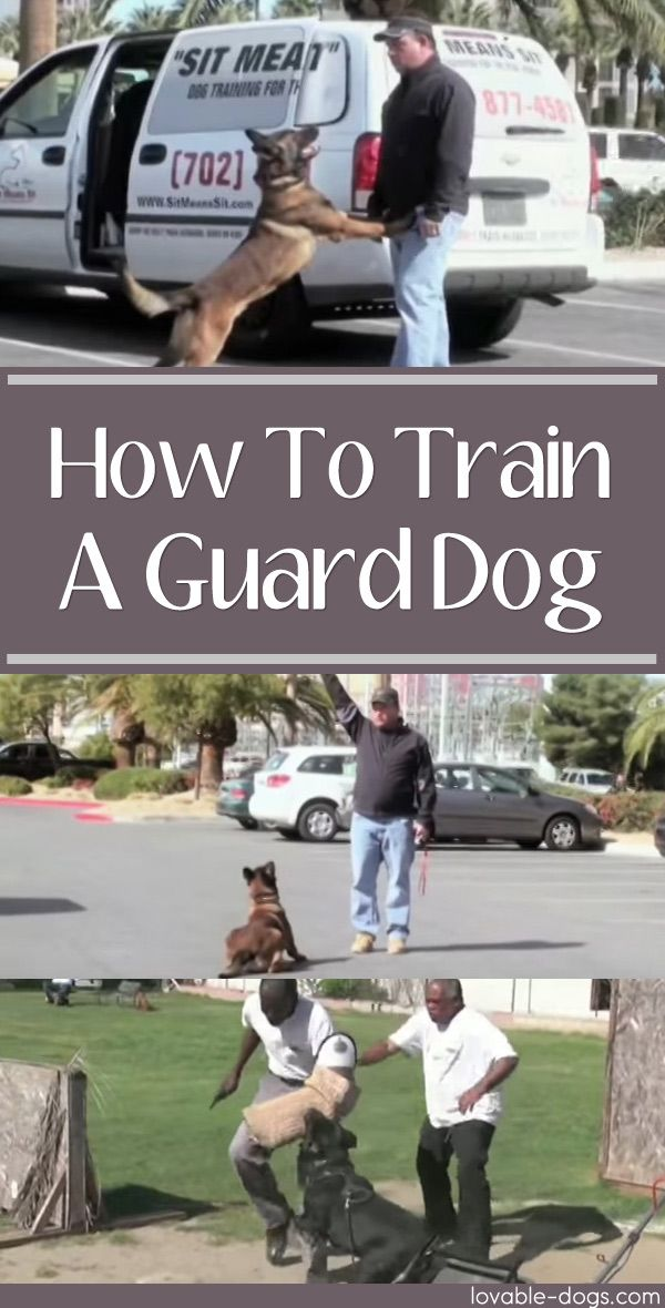 How To Train A Guard Dog	►►	http://lovable-dogs.com/how-to-train-a-guard-dog/?i=p