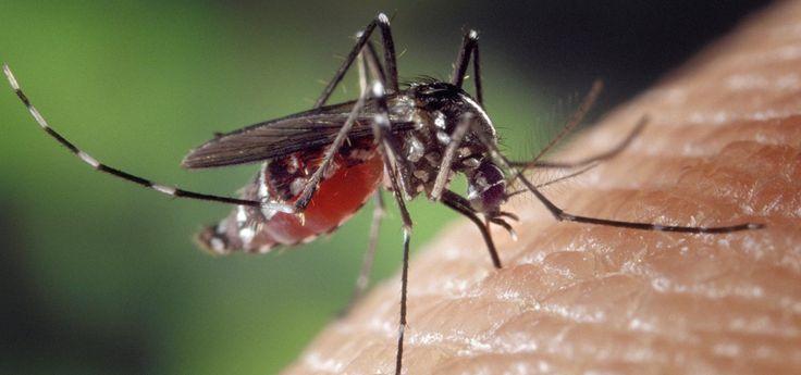 Mückenstiche behandeln: natürliche Hausmittel gegen lästige Moskitos - Utopia.de