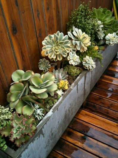trough of succulents: Gardens Ideas, Planting Succulents, Gardens Design Ideas, Succulents Gardens, Plants Succulents, Flower Beds, Gardens Succulents, Concrete Planters, Window Boxes