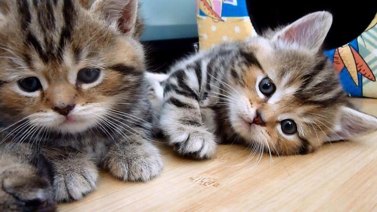 Cute Kittens and Mom Cat  of Funnycatsandnicefish Stream 2017 vol.3