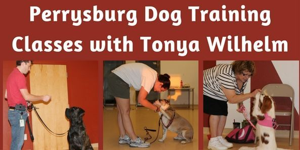 Toledo Dog Training, Perrysburg Puppy Classes, Maumee Dog Trainers and Dog Training Classes.Perrysburg Puppy Training and Dog Training Classes. Positive training 20 years #dogsandpuppiestraining