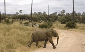 Wait for me! - cutest gif everrrrrrrr