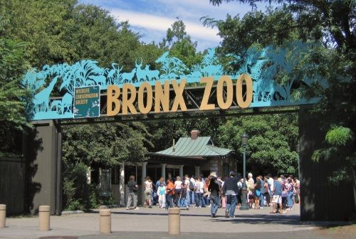 Things to do in New York City - Top NYC Attractions