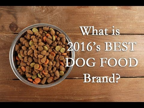 3 Common Canine Diseases Linked to Dog Food - Top Dog Tips