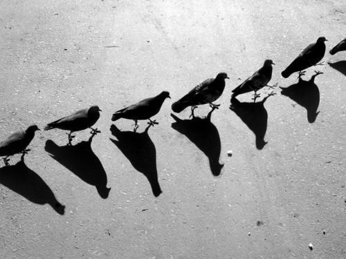 Shadows: Graphics Art, Black And White, Shadows Photography, Shadow Photography, Black White, Alexey Bednij, Birds, Shadows Art, Conceptual Photography