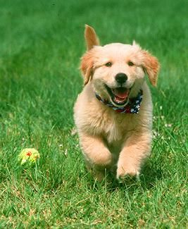 dog pics with names | Huge List Of Male Dog Names | Searching For The Perfect Boy Dog Name?