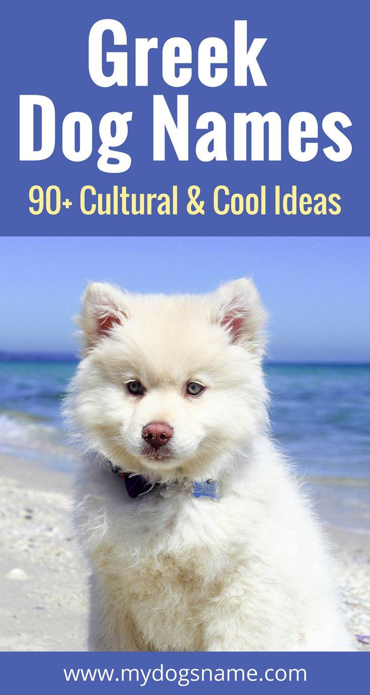 Greek Dog Names (90+ Cultural, Cool Ideas Dog names
