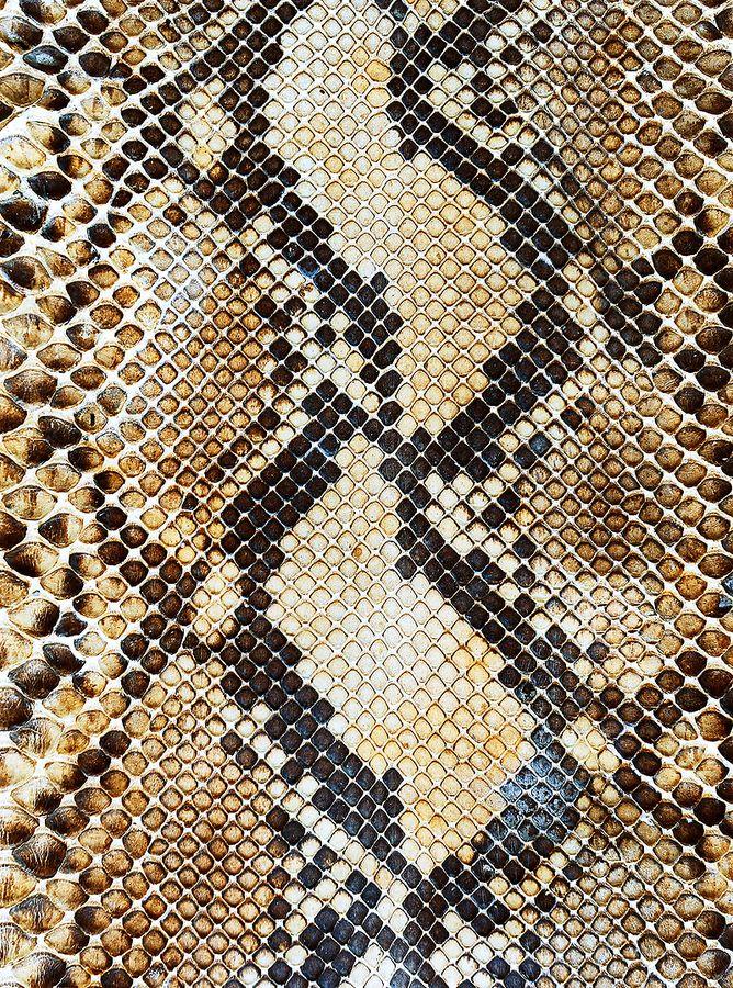 Snake skin by Yan Sayan