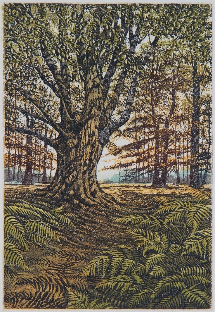 Sunlit Wood by Graham Evernden