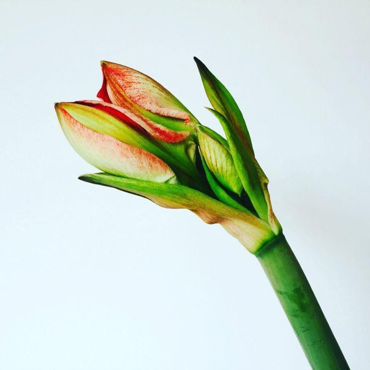 DIY: Zelf bloemenvoedsel maken? Dat doe je zo! http://dejlig.nl/zelf-bloemenvoedsel-maken/