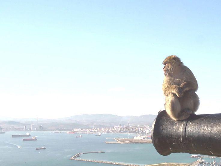 Гора Гибралтар о жизни на полуострове   Обезьяны маготы на видео
