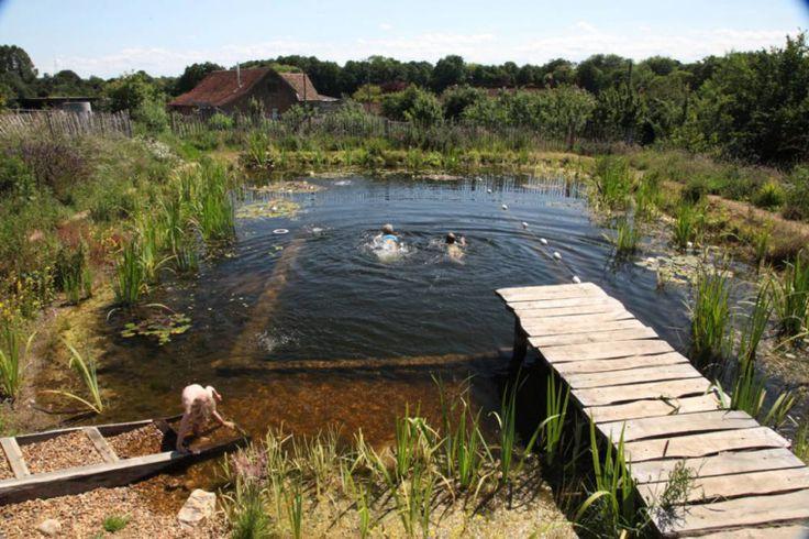 Dammpool / Naturlig pool