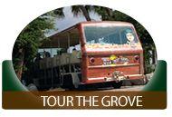 Mixon Fruit Farms - Bradenton Florida Fruit Shipper 2525 27th St. E. Bradenton, FL 34208 Mixon ORANGE BLOSSOM TRAM TOURS are 11:00, 1:00 & 3:00. They are approximately one hour, weather permitting. Orange Blossom Tram Tours are $10.00 for Adults,