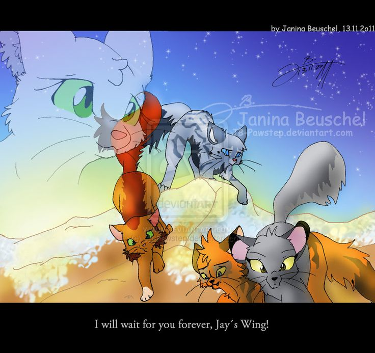 Warriors Into The Wild Online: 54 Best Images About Sad Warrior Cats On Pinterest