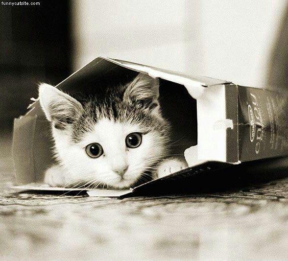 dieren | poes | kat