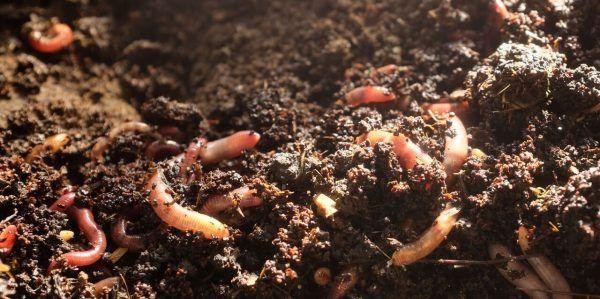 Die Wurmkiste - und der Biomüll ist gegessen!   BIORAMA