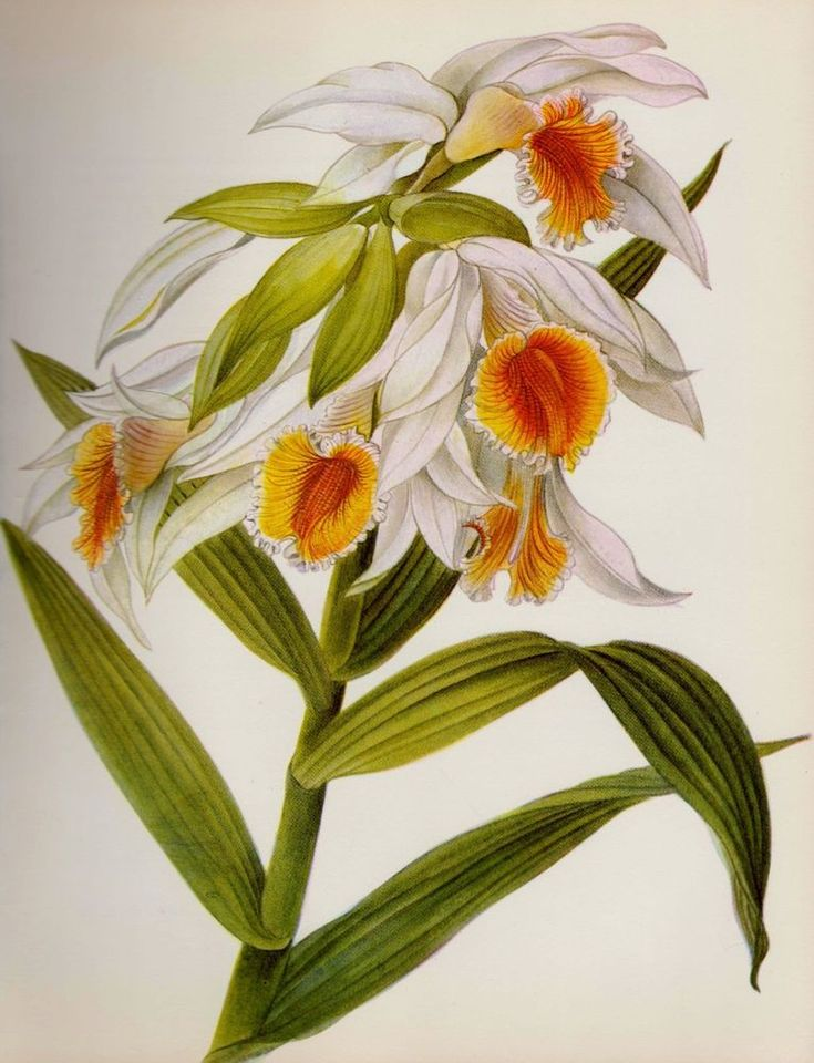 The 747 best Botanical Gallery Wall images on Pinterest | Botanical ...