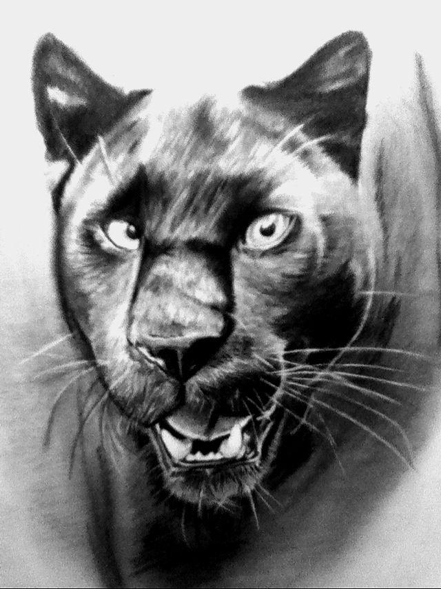 Black Panther Drawing - Google-su00f8k | Black Panthers U0026 Feline Race | Pinterest | Black Panther ...