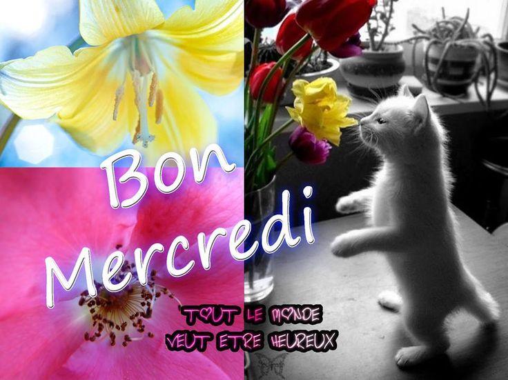 Bon Mercredi #mercredi fleurs chat chaton bon mercredi