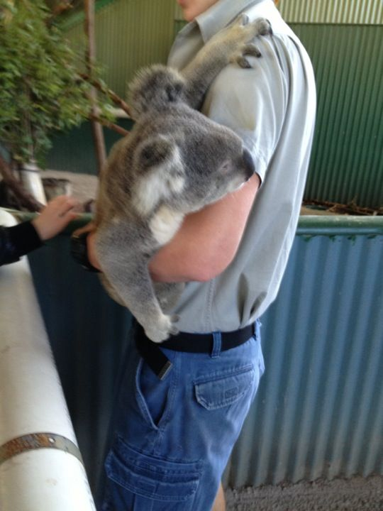 Port Macquarie is well known for it's koala population but Billabong zoo has lots of other surprises.