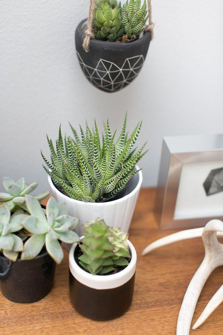 42 best images about cacti succulents on pinterest tropical interior air plant terrarium - Cool succulent plants ...