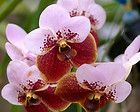 Orchid Fertilizer | Everything Orchids