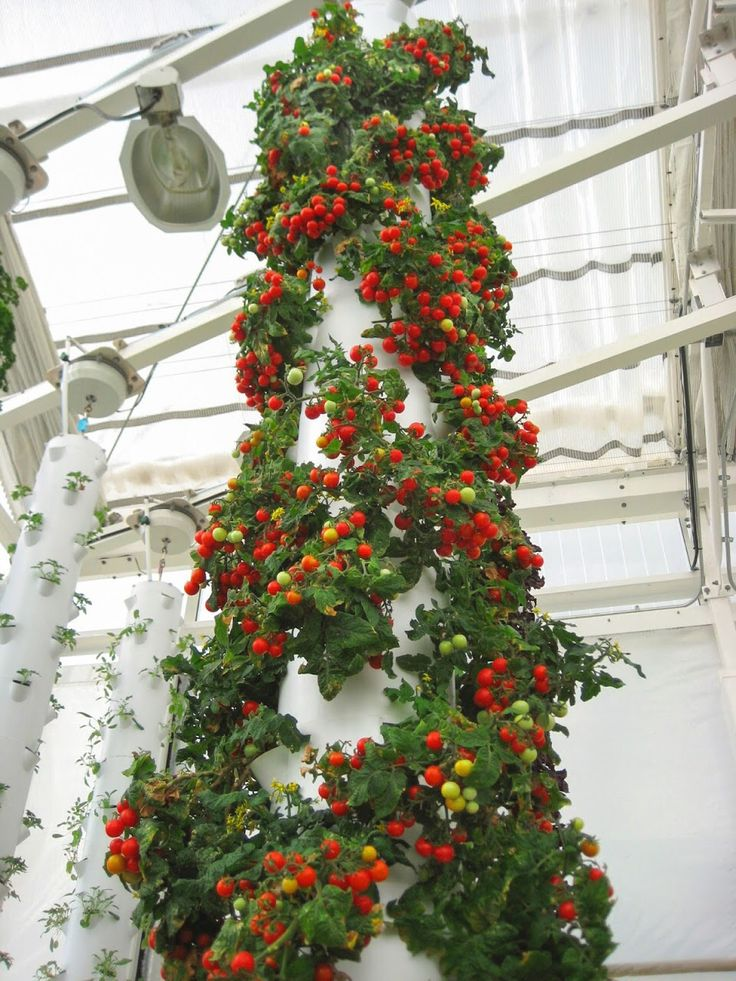1000 Images About Tower Gardens By Juice Plus On Pinterest