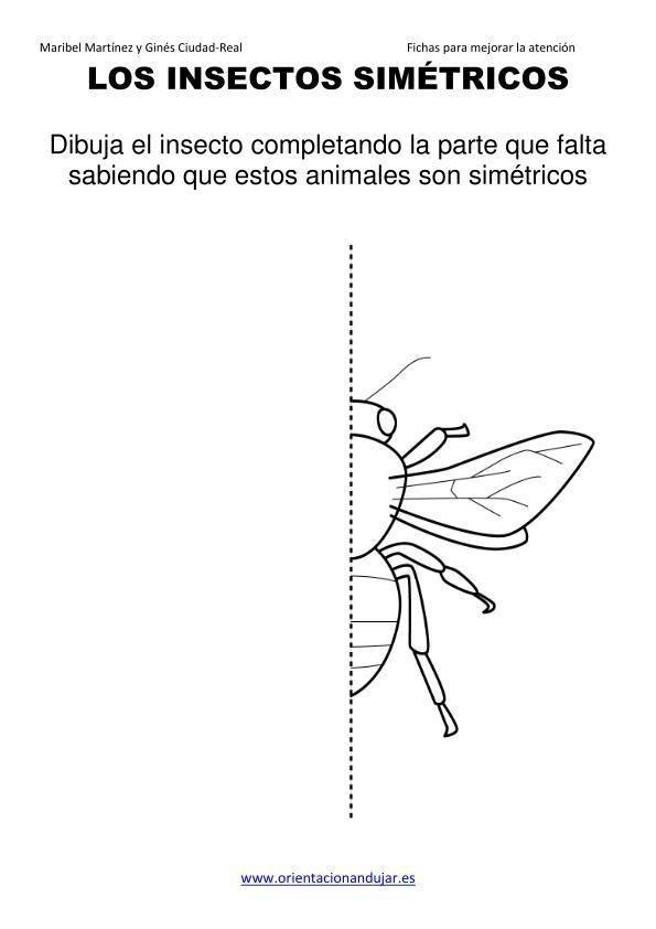 Los Insectos Simetricos Trabajamos Lateralidad Izq Dcha Orientacion Andujar05 15 Insectos Ciencias Naturales Orientacion