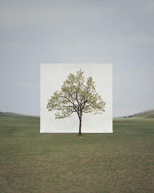 Myoung Ho Lee - cool concept: Trees Art, Myoungho, Ho Lee, Canvas Backdrops, Inspiration Photography, White Canvas, Myoung Ho, Trees Photographers, Lee Trees