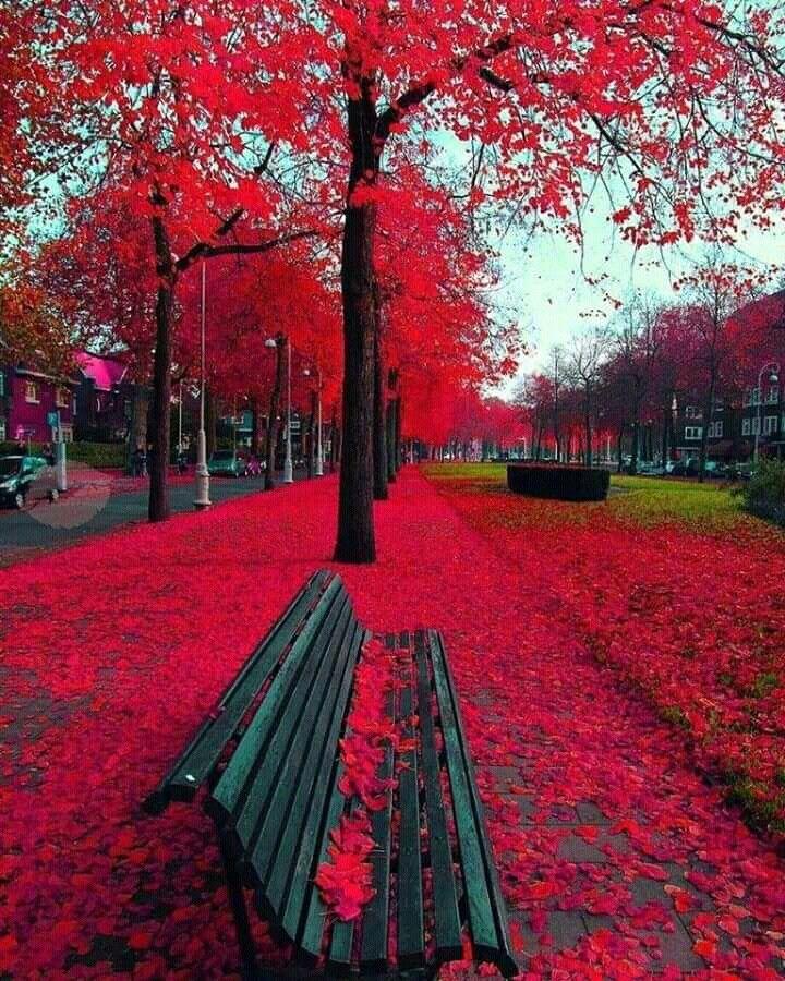 Garbed in Crimson...