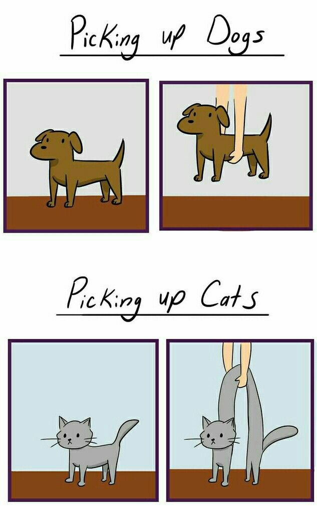 Picking Up Dogs Vs Picking Up Cats Cute Animal Memes Cat Vs