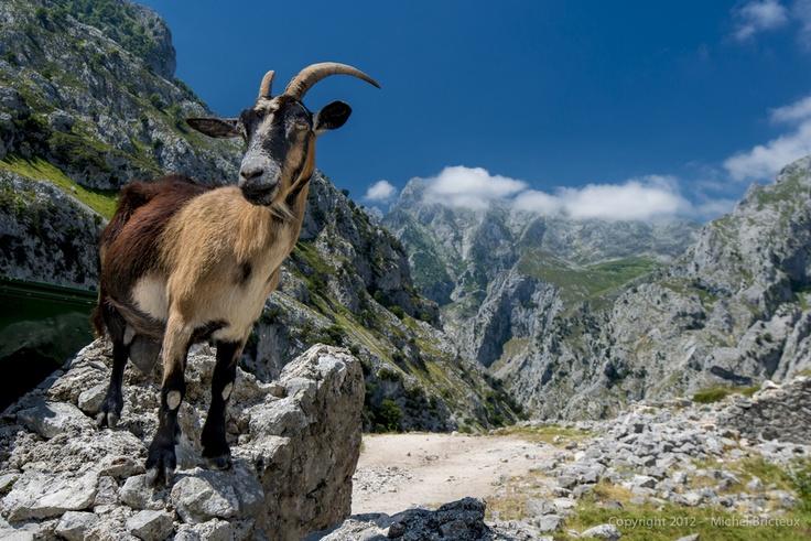 Picos de Europa, no dejes de visitarlos si vienes a Cantabria   Spain