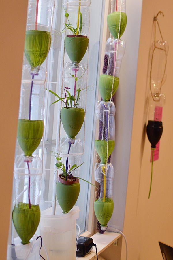 Windowfarm muuttuu ja kasvaa koko näyttelyn ajan.